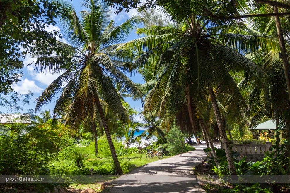 Droga wzgłuż plaży Anse Severe