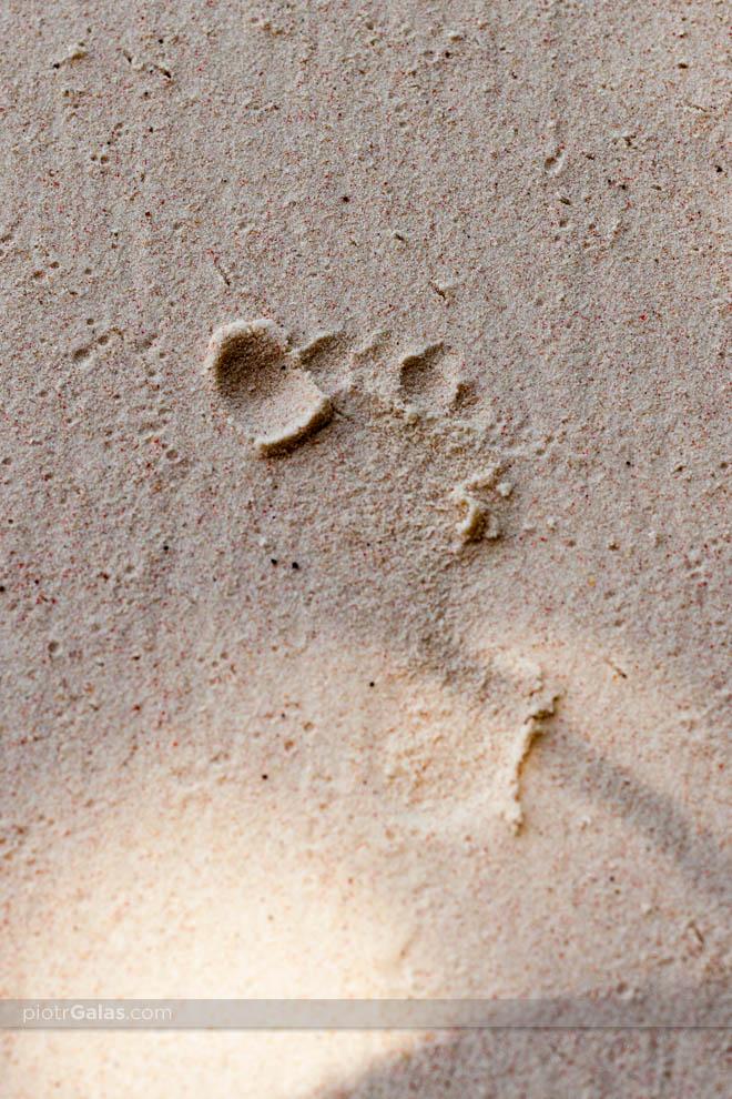 Odcisk małej stópki na piasku na plaży