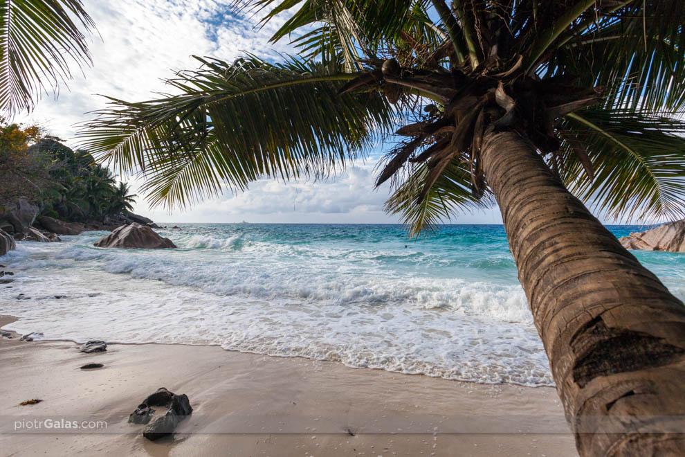 Plaża Anse Patates z widokiem na głazy i palmę