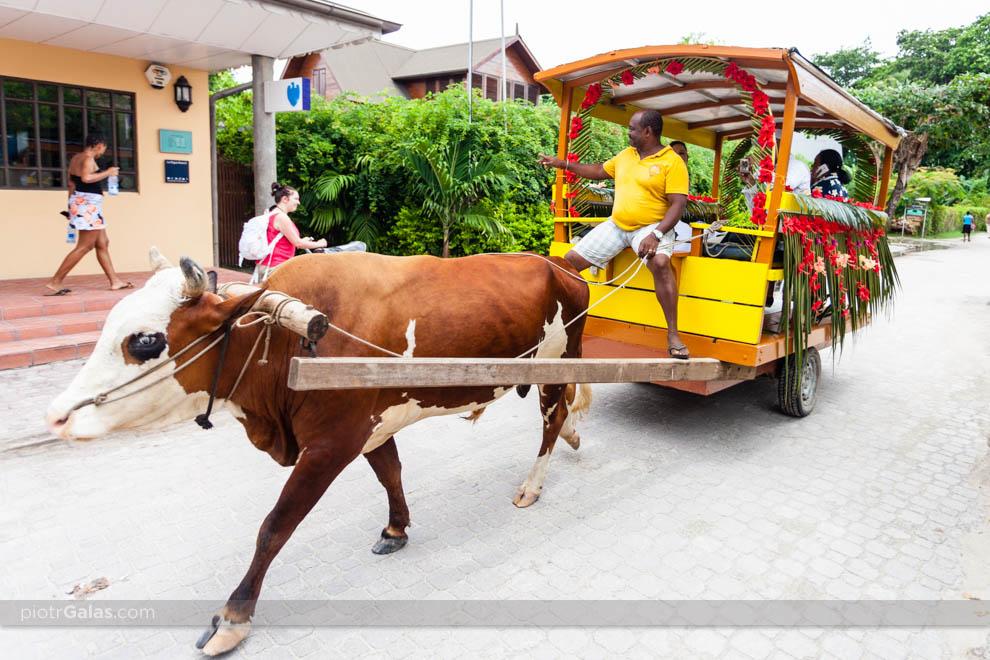 Przejazd tradycyjnym powozem przez wyspę na miejsce ceremoni