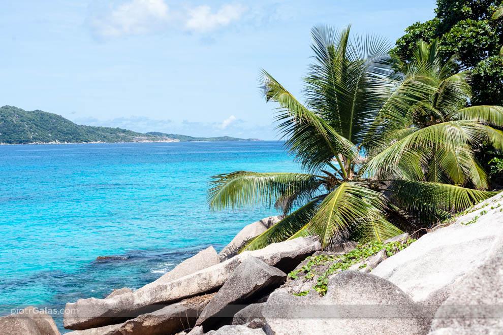 Widok na wyspę Felicite z plaży Anse Patates oraz powalona na skały palma
